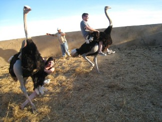 Riding ostriches in Oudsthoorn, South Africa