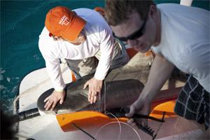 shark-tagging.jpg